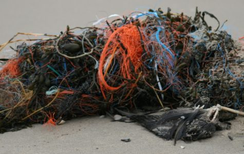 How Plastic is Ruining our Oceans