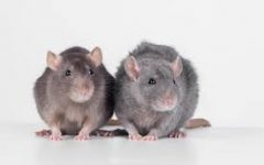Is it Safe to Test Products on Animals?
